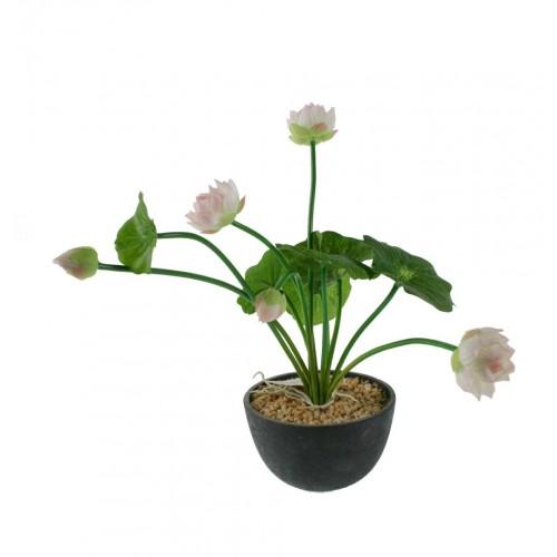 Maceta con flor blanca