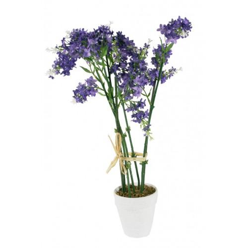 Maceta con flor Lavanda